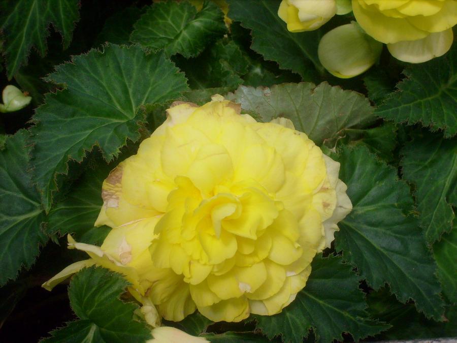 yellow flower 3 by ingeline-art