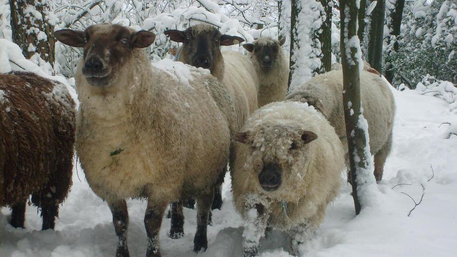 animals in snowlandscape 10 by ingeline-art