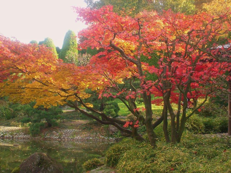 still life autumn by ingeline-art