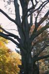 awesome tree 5