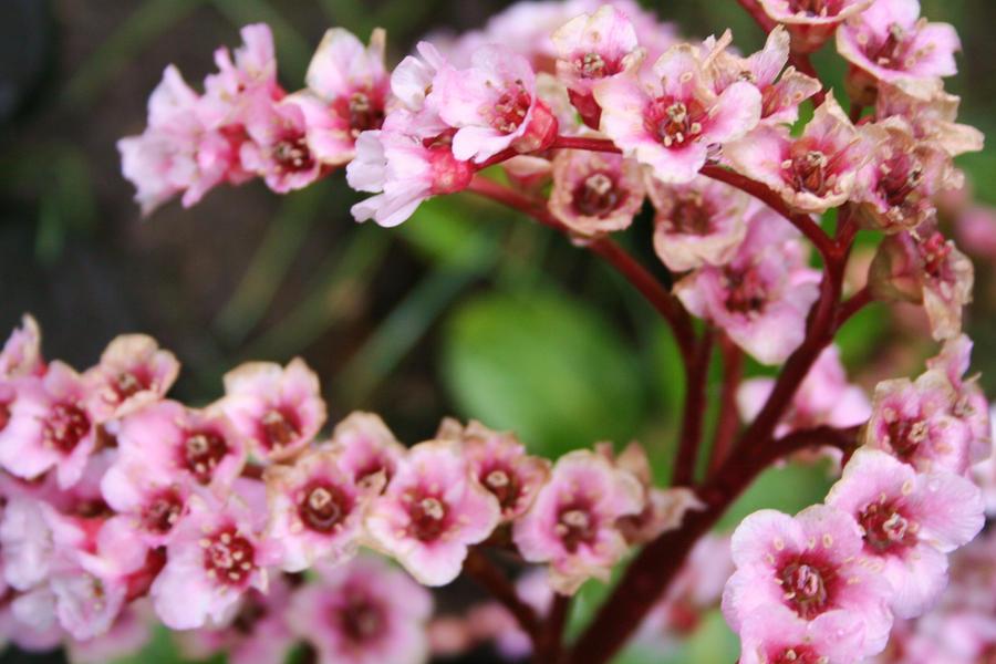 flowers in my garden by ingeline-art