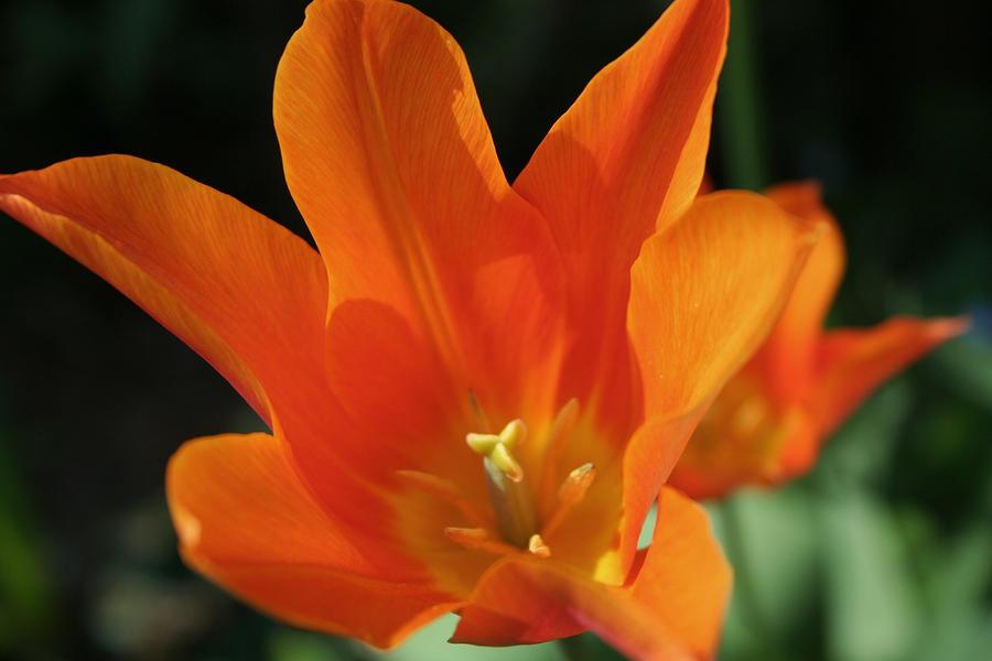 orange beauty by ingeline-art