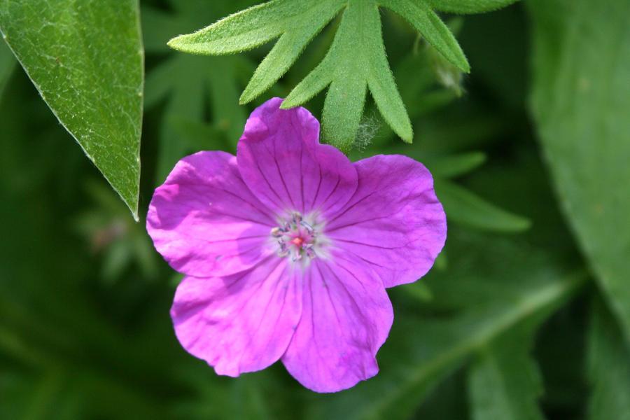 flowers inmy garden yesterday 16 by ingeline-art