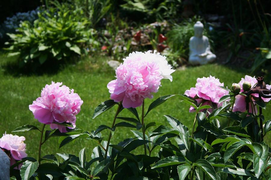 look in my garden by ingeline-art