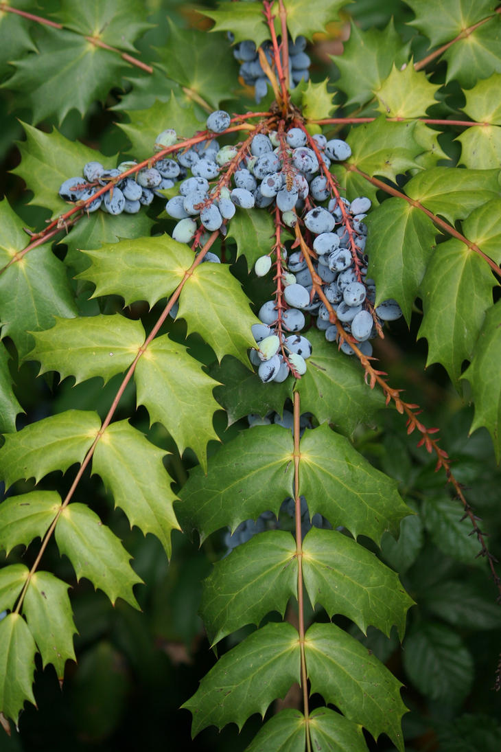 blue berries 2 by ingeline-art
