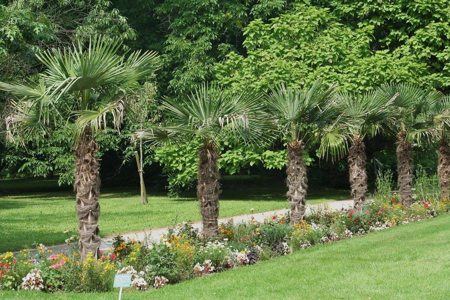 Palm Garden Flora 1 By Ingeline Art On Deviantart