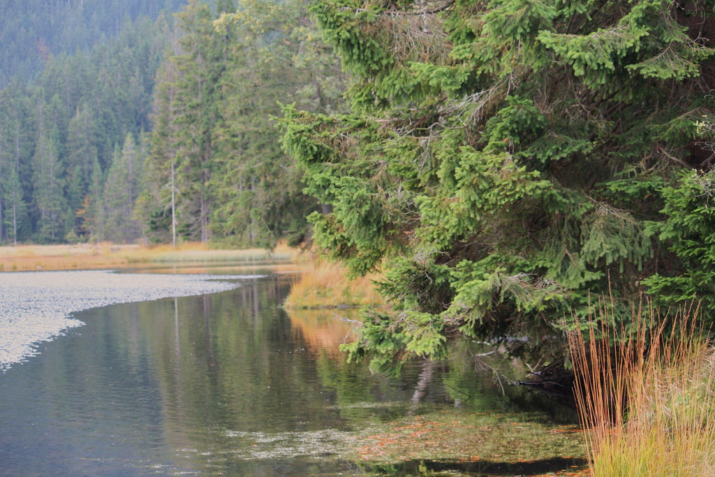 still life arber lake 2 by ingeline-art