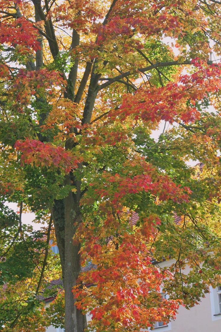 tree in autumn by ingeline-art