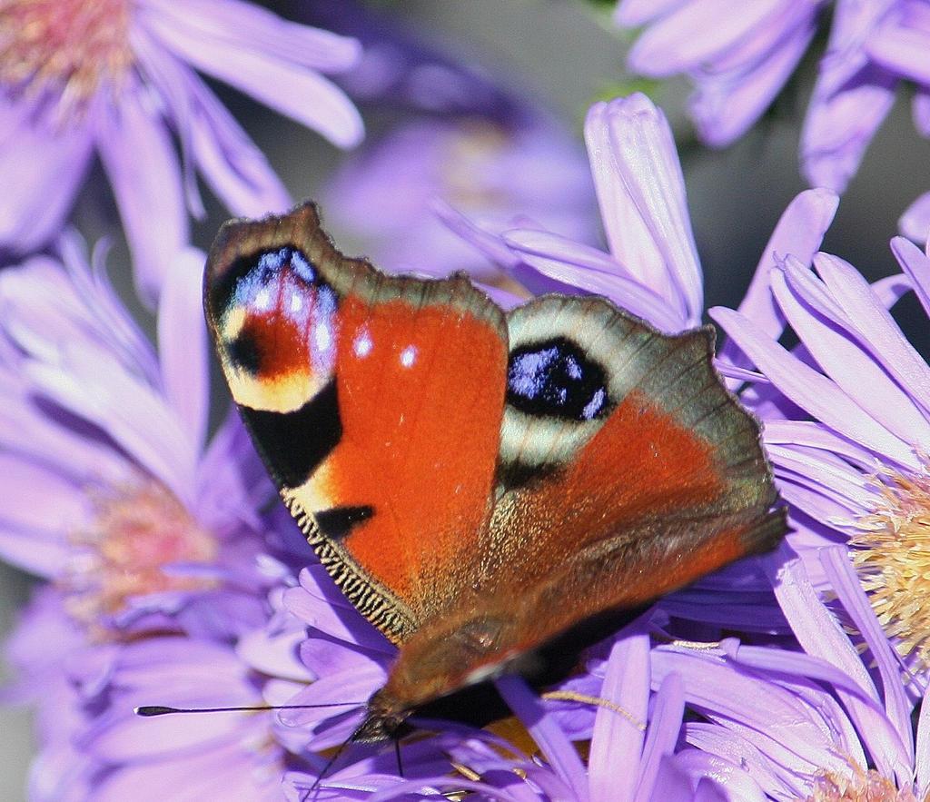 the beauty of a butterfly by ingeline-art