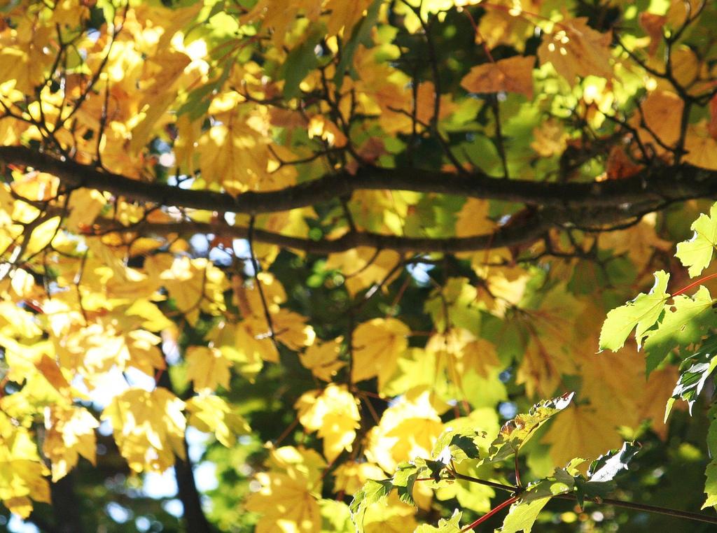 golden leaves 2 by ingeline-art