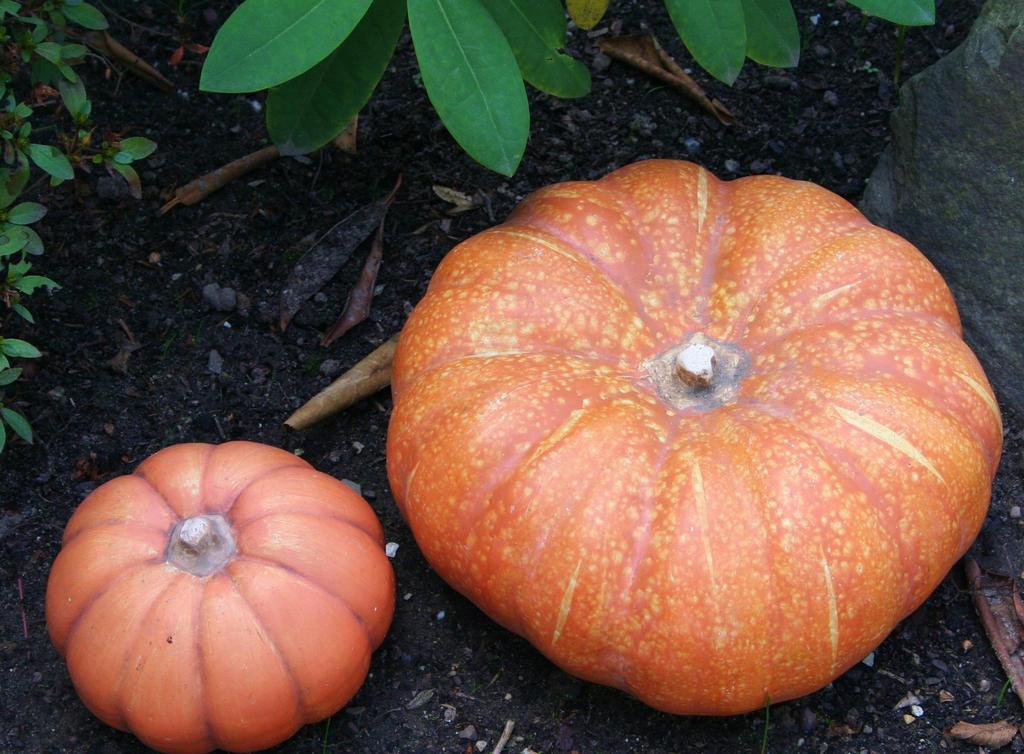 time for pumpkins 3 by ingeline-art