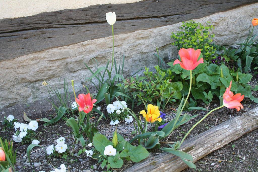 springflowers by ingeline-art