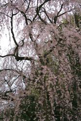 spring is coming 3 by ingeline-art