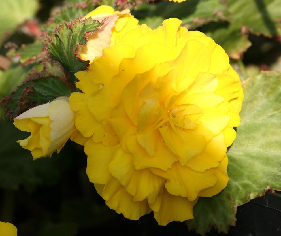 yellow flower 6 by ingeline-art