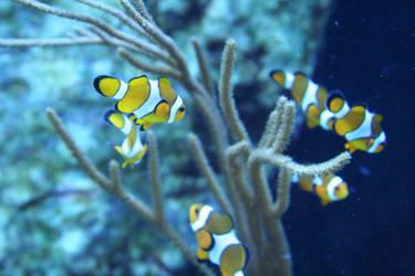 Happy clownfishes 3 by ingeline-art