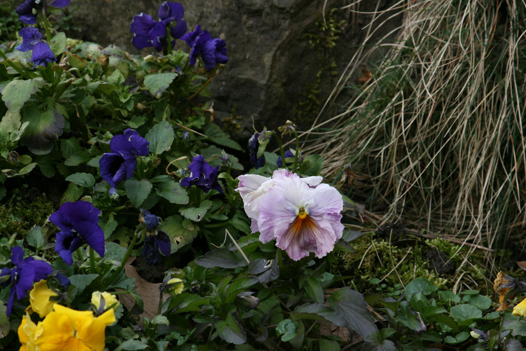 view in flora garden in spring 17 by ingeline-art