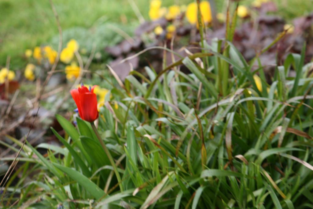 view in Flora garden in spring 19 by ingeline-art