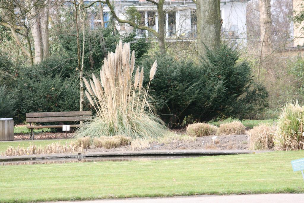view in Flora garden 20 by ingeline-art