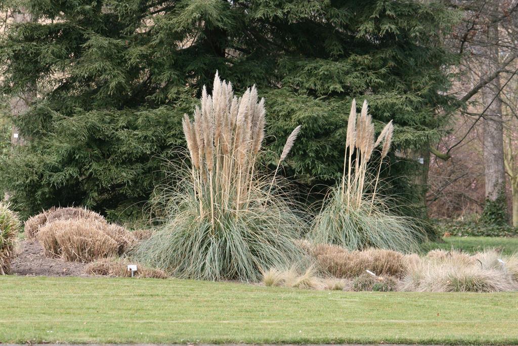 view in Flora garden 35 by ingeline-art