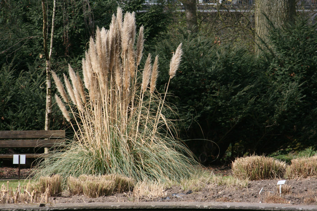 view in Flora garden 37 by ingeline-art