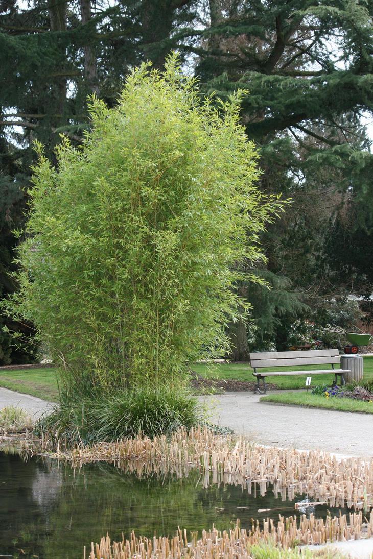 view in Flora garden 39 by ingeline-art