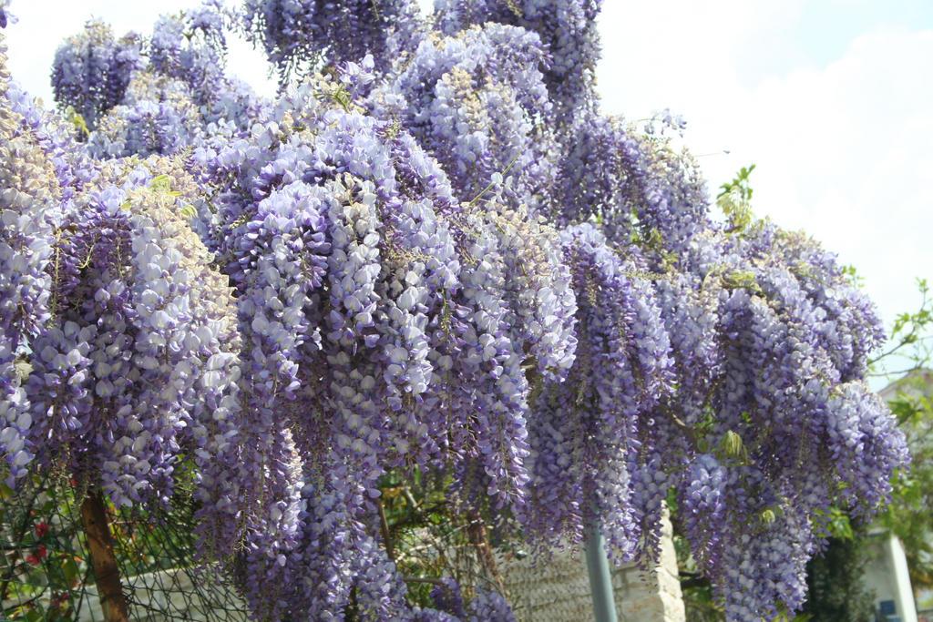 wonderful blooming 3 by ingeline-art