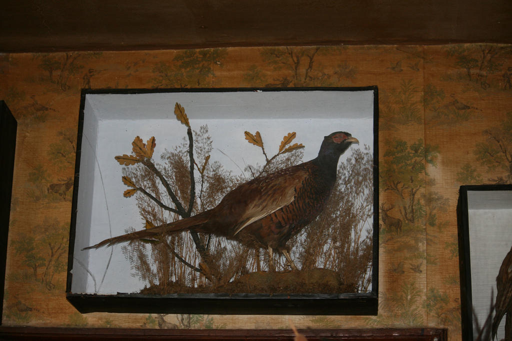 padded bird by ingeline-art