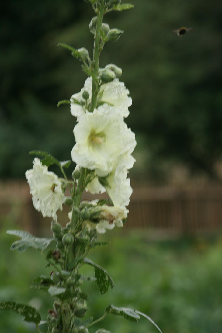 view to hollyhock 3 by ingeline-art