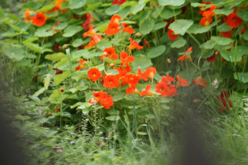 little orange beauties by ingeline-art