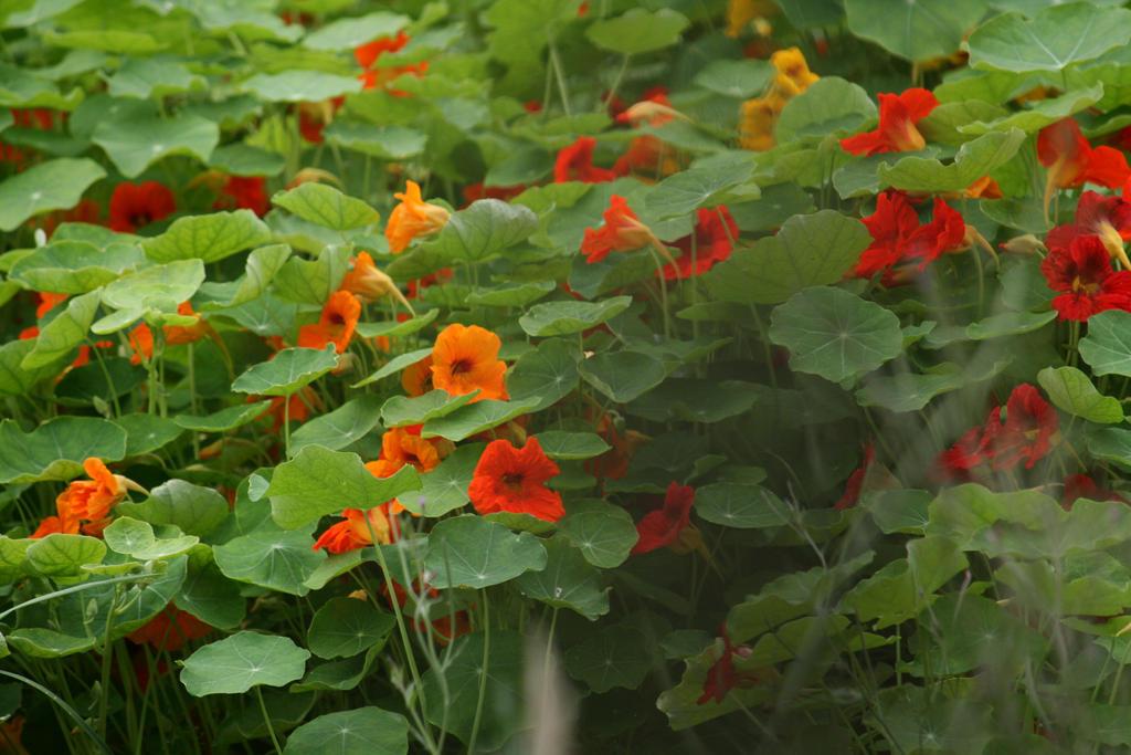 little orange beauties 2 by ingeline-art