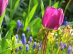 seen in my garden 2