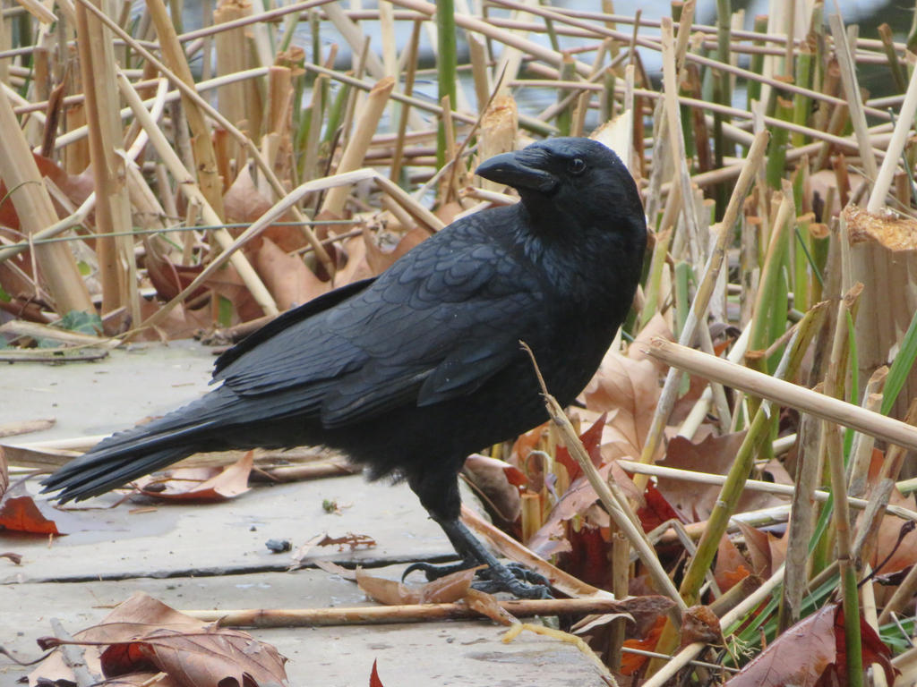 bird in spring time by ingeline-art