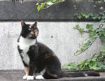 lovely cat 2
