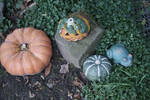 pumpkins and frogs
