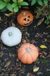 pumpkin decoration in my garden