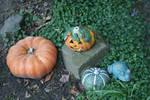 pumpkin decoration in my garden 2