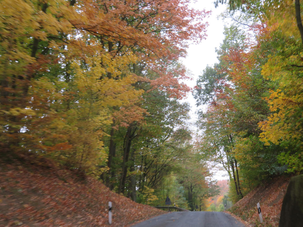 view from road in autumn by ingeline-art