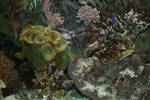 view in aquarium