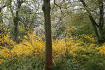 yellow blooming 3