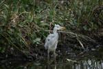 heron closer 3