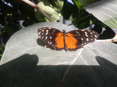 view to butterfly