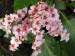 flowers in my garden today