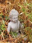 buddha in my garden today