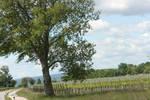 landscape at Neeusiedler Seed