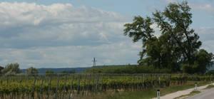 landscape at Neusielder See