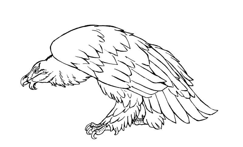 Vulture Line Drawing Bearded vulture linear...