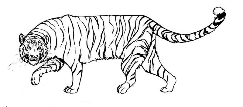 Line Drawing Tiger : Tiger lineart by xiphosuras on deviantart