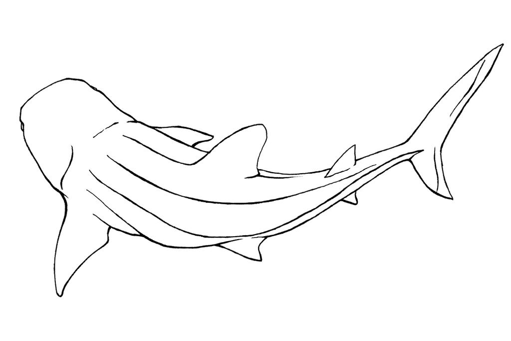 Line Art Shark : Whale shark lineart by xiphosuras on deviantart