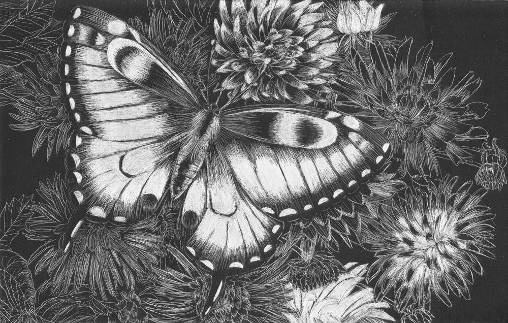 Butterfly scratchboard - photo#11