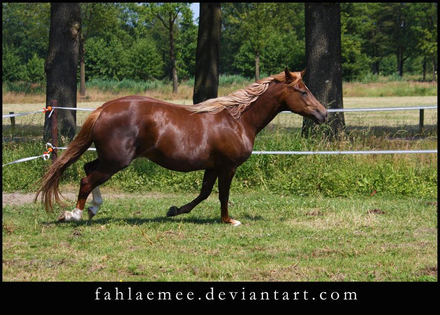 Flaxen chestnut horse